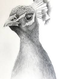 animals pencil shading animal sketchbook drawing art ideas