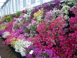 garden design with ground cover gardens spain purple heart plant