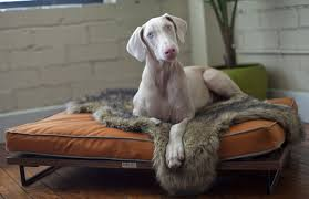 Elevated Dog Beds For Large Dogs Architect Pets Makes Modernist Doggy Daybeds And Scratching Posts