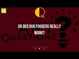 Bed Bug Fogger Do Bed Bug Foggers Really Work Youtube