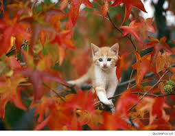 cute cat halloween wallpaper autumn wallpapers hd desktop backgrounds images and pictures