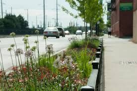 Urban Garden Los Angeles How Do Rain Gardens Help With Storm Water Soils Matter Get The