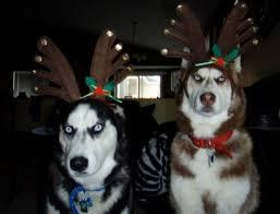 Husky Dog Halloween Costumes Buy Favorite Pet Costume Ideas Big Dot