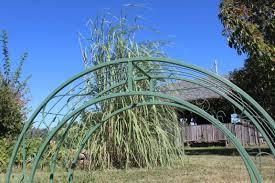 wrought iron round top garden trellis double arches 60
