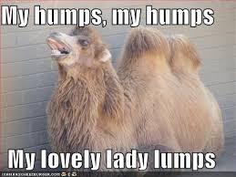 Camel Meme - camel meme my humps my humps my lovely lady lumps picsmine