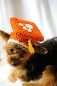 dog graduation cap burnt orange knit graduation cap for dogs hats and accessories