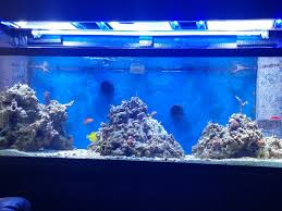 Floating Aquascape Reef2reef Saltwater And Reef Aquarium Forum - am i crazy for thinking mh t5 reef2reef saltwater and reef