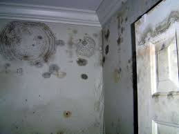 Mold Growing In Bathroom Professional Abatement Services Inc Pasi