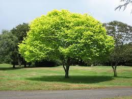 albero giardino alberi