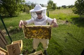 Backyard Beehive Back Yard Beekeeping Approved In Brooklyn Park Startribune Com