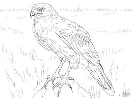 hawk coloring pages getcoloringpages com