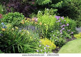 perennial garden stock images royalty free images u0026 vectors