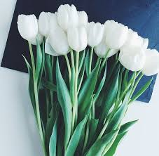 white tulips 30 most beautiful white flowers in the world hd images small