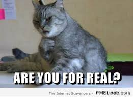 Sarcastic Cat Meme - 17 are you for real funny cat meme pmslweb