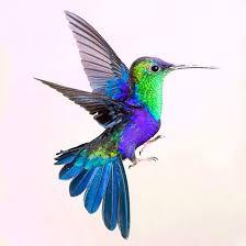 25 amazing hummingbird tattoo designs