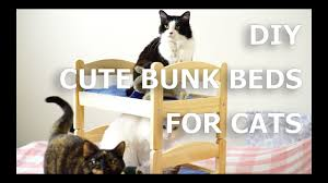 how to bunk bed for cats ikea hack youtube