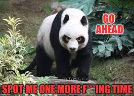 Funny Panda Memes - panda spotting imgflip