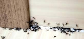 fourmis cuisine comment se debarrasser des fourmis dans une cuisine comment se