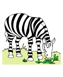 wild zebra coloring pages kids color print