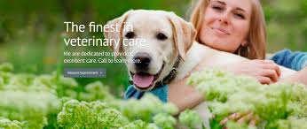 100 top veterinary colleges in the us our veterinarian team