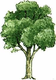 the tree hotelroomsearch net