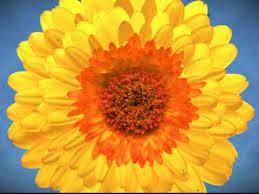Flower Delivery Edina Mn - minneapolis floral design coming to edina edina mn patch