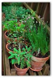 easy examples of container gardens a beginner u0027s guide to container