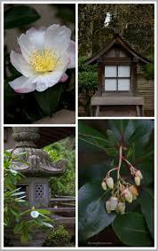 41 best japanese garden images on pinterest japanese gardens
