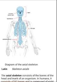 Human Anatomy And Physiology Terminology Human Anatomy And Physiology Terminology Human Anatomy And
