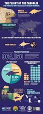 best 25 endangered animals facts ideas on pinterest