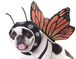 Monarch Butterfly Halloween Costume Amazon Animal Planet Pet20101 Butterfly Dog Costume Small