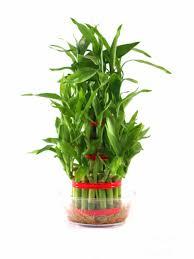 Plants For Desk Indoor Plants Buy Indoor Plants Online At Best Prices In India