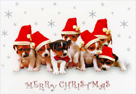 dog christmas cards puppies in santa hats box of 18 dog christmas cards by designer