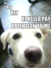 Pay Attention To Me Meme - hey hey hey hi hello pay attention to me attention hog dog