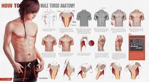 Anatomy Videos Free Download Tutorials U2013 Valentina Remenar