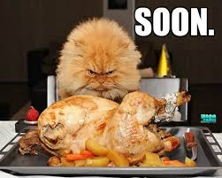 thanksgiving is coming soon cat thanksgiving thanksgiving dinner
