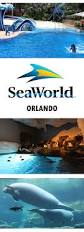 Sea World Orlando Map by Meeting The Dolphins At Seaworld Orlando Florida Yorkshire Wonders