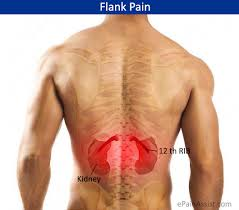 Loin Human Anatomy What Can Cause Pain In The Flank Region