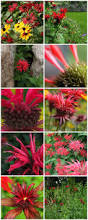 plants native to pennsylvania 12 best native ferns images on pinterest native plants ferns