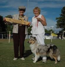 australian shepherd club qld collie rough u0026 smooth club queensland