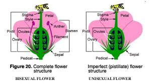 sexual and asexual reproduction in plants