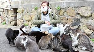 cat island girl swarmed by cats on japan s cat island youtube