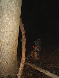 Cheap Coon Hunting Lights Coondawgs Com Coonhound Classifieds And Message Forum