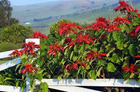 thanksgiving honolulu does hawaii have seasons hawaii real estate market u0026 trends