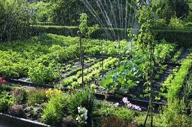 Home Vegetable Garden Ideas Vegetable Gardening Pictures Jennybeautydiva Club