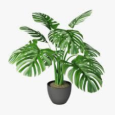 monstera pot 3d растения pinterest 3d