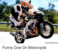 Funny Motorcycle Meme - graney frankenstevnogm funny cow on motorcycle funny meme on me me