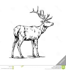 hd brush painting ink draw vector deer illustration black white