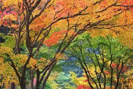 usa oregon portland maple trees in autumn color at portland