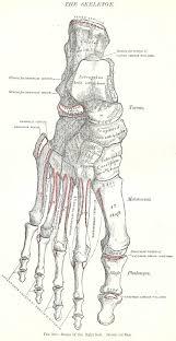 Printable Halloween Skeleton Halloween Skeleton Images 1893 Gray U0027s Anatomy Illustrations